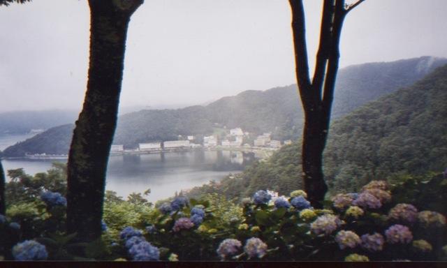 japanhydrangeasview