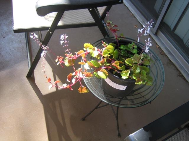 plantmolly